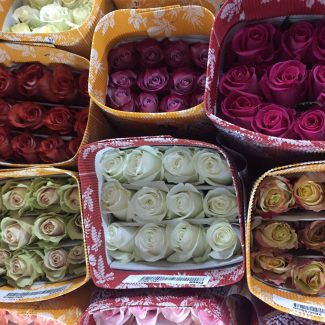 Rose Assorted Color GROWERS CHOICE 70 cm