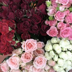 Spray Rose Assorted Color 50 cm