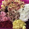 Carnation Assorted Color Select