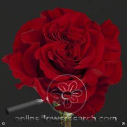 Rose Hearts 60 cm