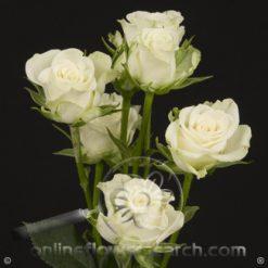 Spray Rose Snowflake 50 cm