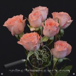 Spray Rose Elegant Rosever 50 cm