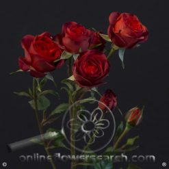 Spray Rose Sicilia 50 cm
