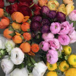 Ranunculus Mix Color 40-45 cm