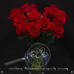 Fun Pack Red Roses 50 cm