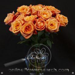 Fun Pack Orange Roses 50 cm