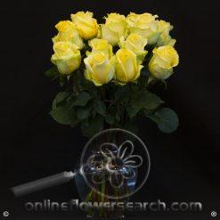 Fun Pack Yellow Roses 50 cm