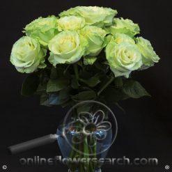 Fun Pack Green Roses 50 cm