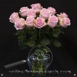 Fun Pack Pink Roses 50 cm