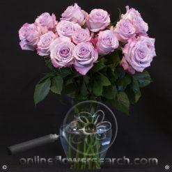 Fun Pack Lavender Roses 50 cm