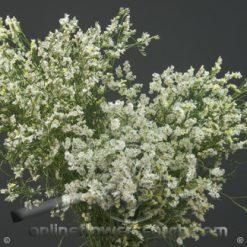 Limonium White 70-80 cm