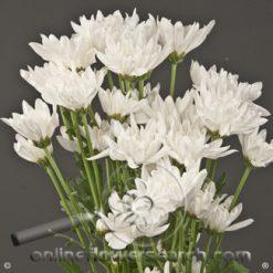 Poms Cushion White Maisy Select