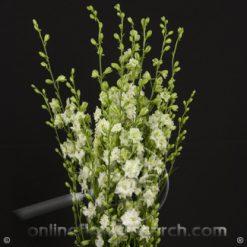 Larkspur White 80-90 cm