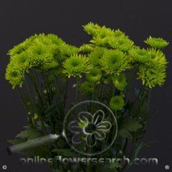 Poms Novelty Green Coqueta Select