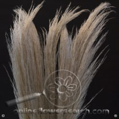 Preserved Pampas Grass Fat Natural