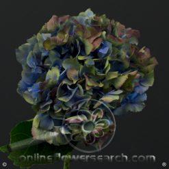 Hydrangea Jumbo Antique Blue