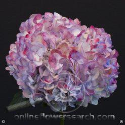 Hydrangea Jumbo Antique Lilac